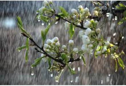 Deszcz Słowa Bożego
